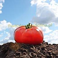 Pomidorowadolina.pl