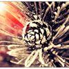 Willa Drewniana Róża