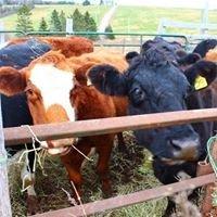 Little Dorset Farms
