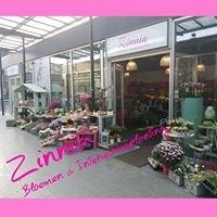 Zinnia Bloemen & Interieurbeplanting