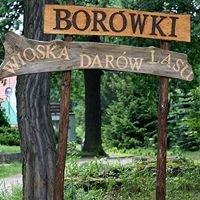 Borówki - Wioska Darów Lasu