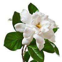 Kwiaciarnia Gardenia  Anna Stpiczyńska-Iwańska