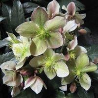 Blomsterkonstnären Karin Oscander AB
