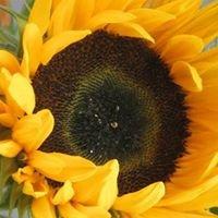 Sivedens blommor