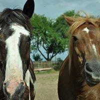 Stajnia koń na biegunach
