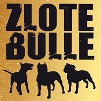 Złote Bulle - Fundacja AST - Amstaff, Pitbull, Bulterier, Staffik