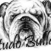 Testudo Bulldogs FCI - buldog angielski - hodowla
