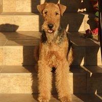 "Hodowla Airedale Terrier ""Airedaleski"""