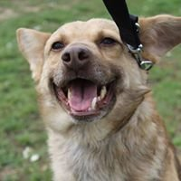 """Schronisko dla bezdomnych psów """"Podaj łapę"""" w Tatarach"""