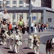 Dogworker - Daniel Hurst