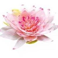 Lotus Saal