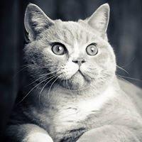 Catpics - Studio Degonne - Photographes pro pour animaux de compagnie.