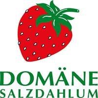 Domäne Salzdahlum