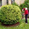 Dārzkopība thumb