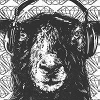 Das weisse und schwarze Schaf Luzern