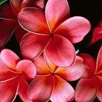 Kwiaciarnia Gabriel
