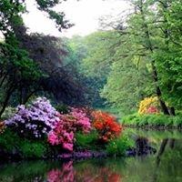 Rododendron - Garden