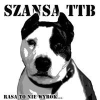 Krakowskie Bullowate Do Adopcji