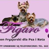 Figaro salon strzyżenia dla Psa i Kota
