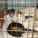 Zwierzaki z kliniki w Latchorzewie