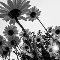 Holly O'Briant Photography