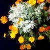 Kwiaty Pani Ewy