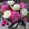 Kwiaciarnia Dąbrówka
