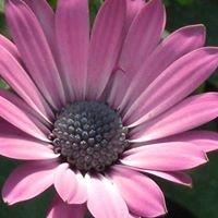 Gärtnerei Dosch Blumen