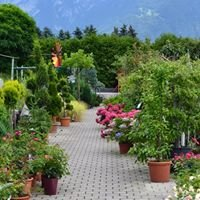 Gartencenter Rodigari