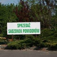 Eko Sadzonki Pomidorów Dziadka Jerzyka