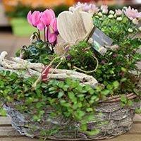 Blumen Büttner
