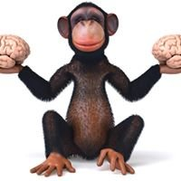 MonkeyMind Training