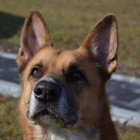 Schronisko dla bezdomnych zwierząt w Chełmku
