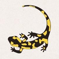 Salamander Naturgarten AG