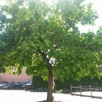 Catalpa Cocktaillounge