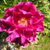 Pracownia Florystyczna Portrety Kwiatów