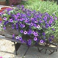 My Mommy's Garden & Greenhouse, LLP
