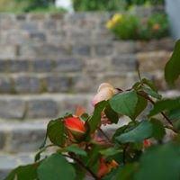 Garten& Pflasterbau Mohrenweiser