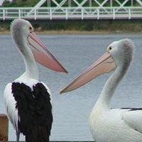 Warrnambool River Cruises