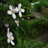 Gartengestaltung Holubar
