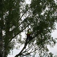 Baumpflege Erhardt