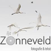 Ilja Zonneveld - fotografie