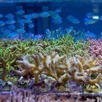 Korallenzucht Wendel