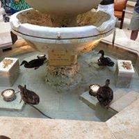 The Peabody Hotel Orlando-Pool Area