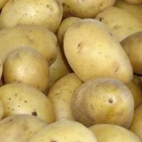 Ziemniaki Ekologiczne w Białymstoku
