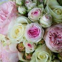 Kwiaciarnia Stokrotka