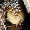 """Cercle apicole """"Abeille du Hain"""""""