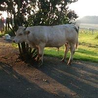 La ferme d'Oliveau