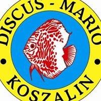 Sklep Zoologiczno-Akwarystyczny Discus Mario