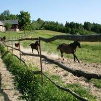 Agro Ryglice Stacja Górskiej Turystyki Konnej